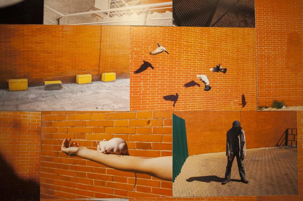 P2P_Prácticas contemporáneas en la fotografía española 24-David-Hornillos_detalle-1024x682