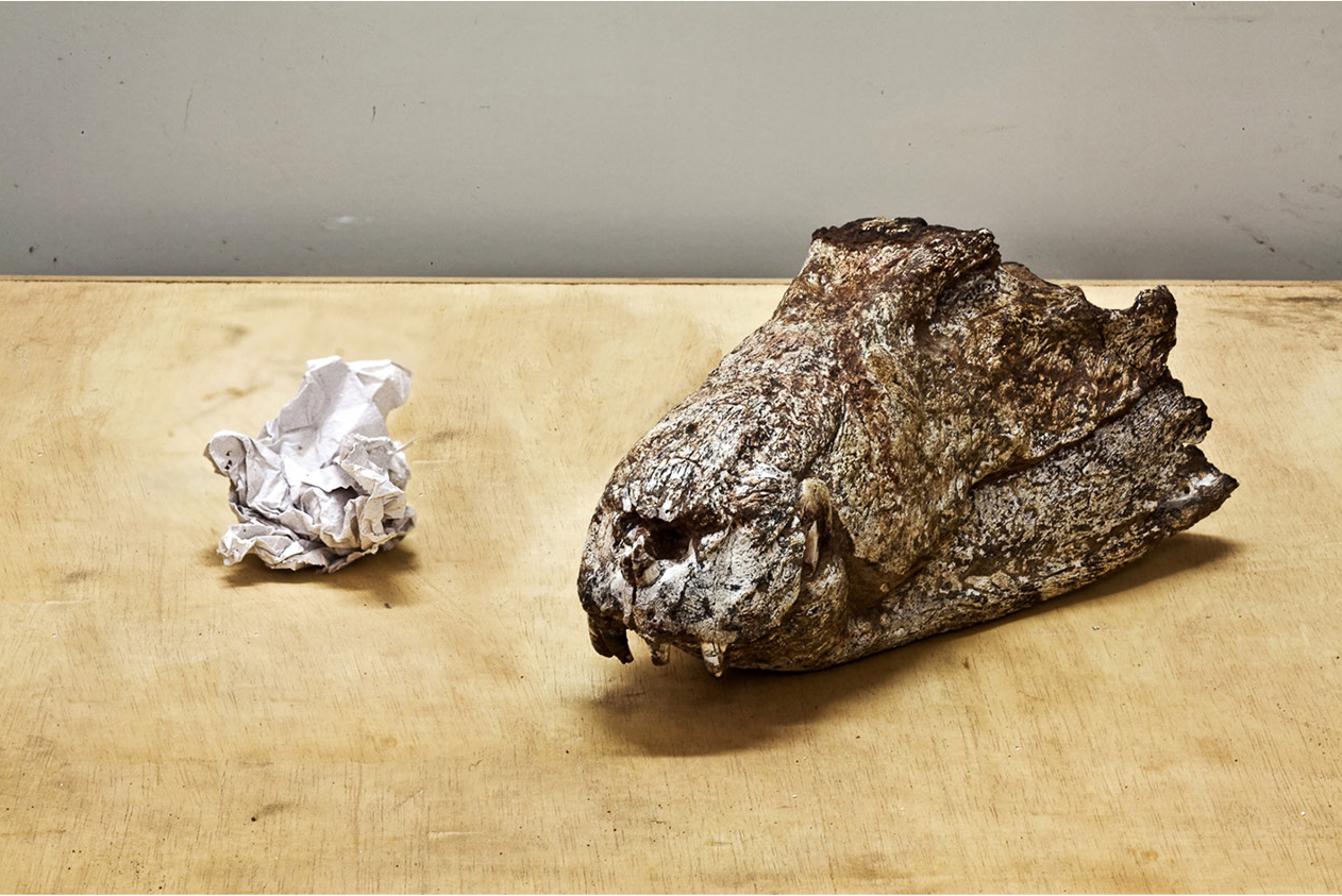 Eighty Million Years, Crocodile and Paper 2012