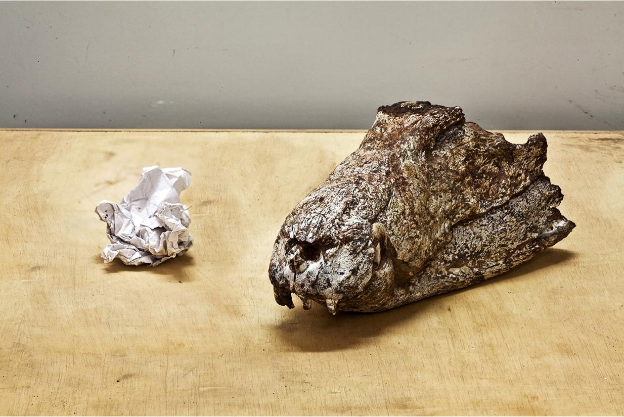 Eighty Million Years, Crocodile and Paper 2012