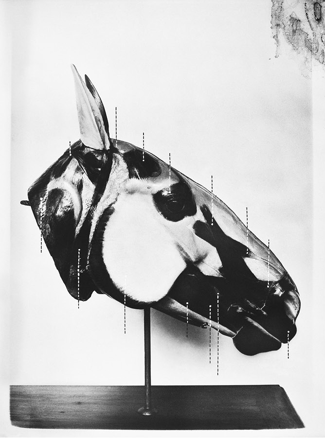 The Head of a Horse 2013