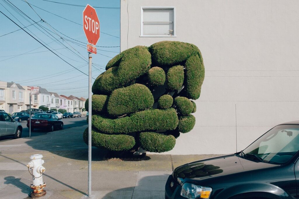 Tree-por-Steve-Couture