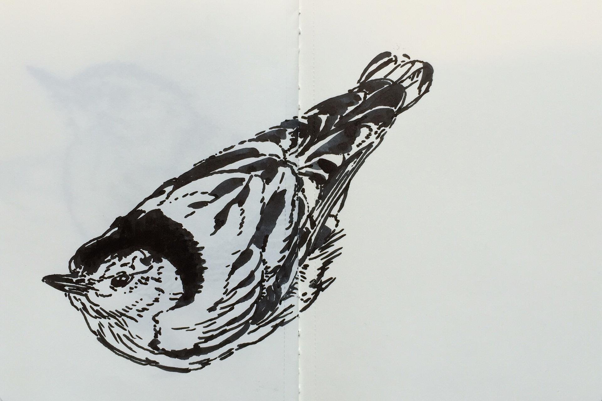 Pájaro  muerto cuando estaba vivo (2016). Enrique Enriquez.